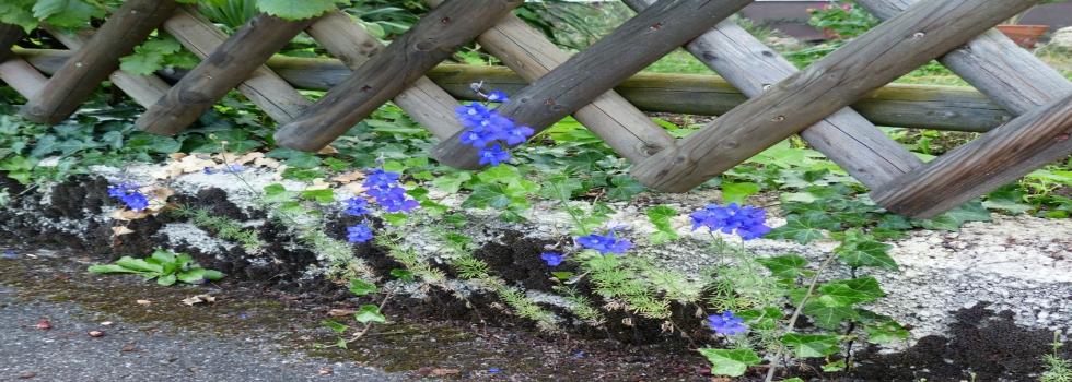 Basic Gardening Services